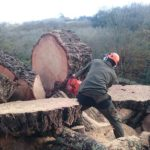 tree surgeons at work in St Austell