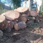 Tree Surgeons St Austell