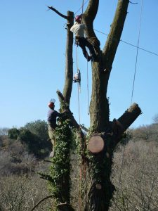 Tree Surgeon Bodmin