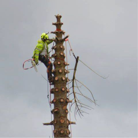 Tree Surgeon Newquay