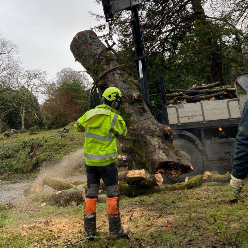 Tree Surgeon Truro Tree Removal
