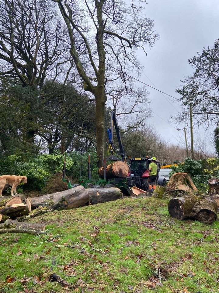 Tree Surgeon in Blackwater