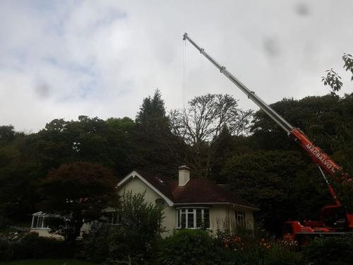 Professional Tree Surgeons Plymouth