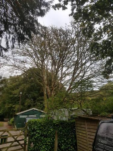 Trusted Tree Surgeons