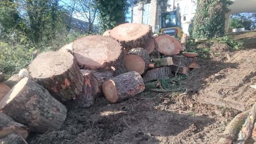 Tree Surgeons Plymouth