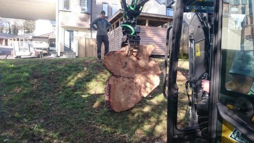 Tree Surgeons Experts