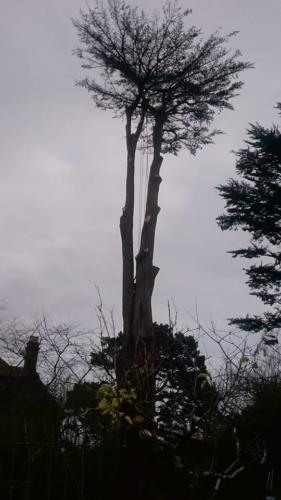 Tom Pugh Tree Surgeons